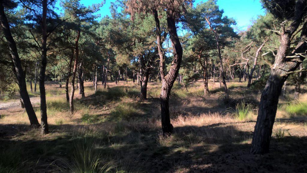 bos weerterbergen burgertrutjes