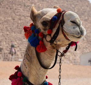 camel-1378571_960_720