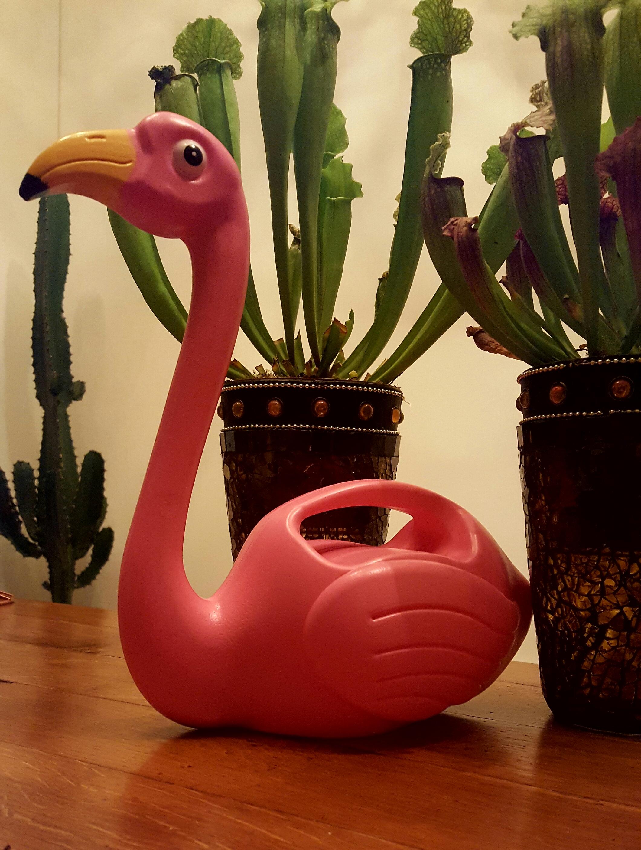 burgertrutjes flamingo gieter beste cadeaus inspiratie tips