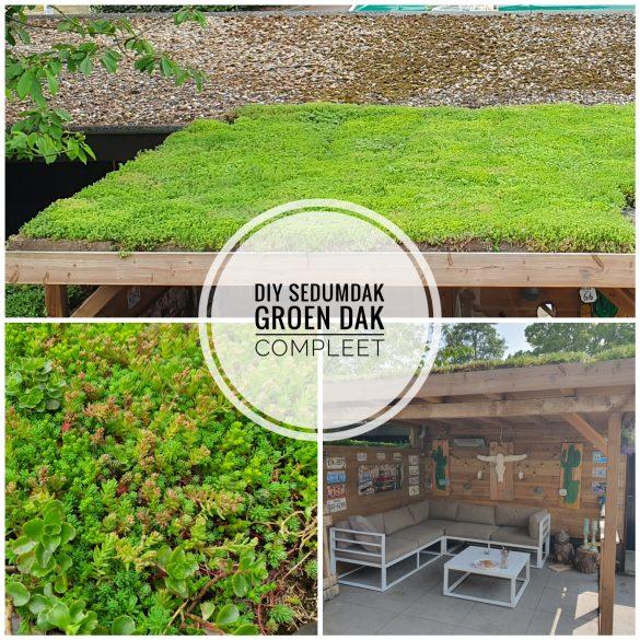 sedumdak van groen dak compleet diy sedum